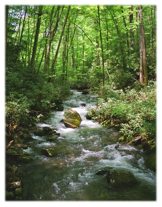 Forest Stream Photography - Joyce Kilmer Forest, Appalachian Mountains North Carolina - Home Decor Fine Art Print or Note Cards