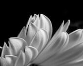 Petals 8x10