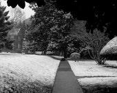 Snowy Walk 8x10