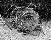 Bird Nest 5x7