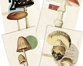 Fungus Set- Digital PDF ACEO Tags for Download and Print
