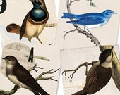 Bird Set- Digital PDF ACEO Tags for Download and Print
