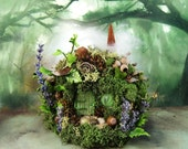 Ancient Forest Fairy Mound