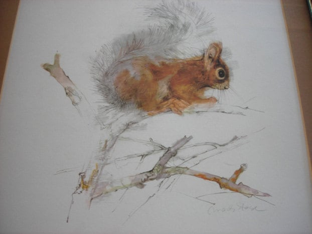 Vintage Squirrel Print Framed Woodland Art Mads Stage