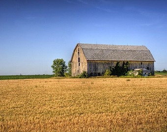 Wheat Field Barn Fine Art Print - Home Decor