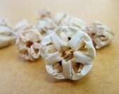 Aristotle Lanterns Sea Urchin teeth Toxopneustes pileolus Shell Flowers Sailors Valentines