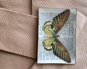 Butterfly & Dictionary Glass Tray -- rectangular decoupage plate gold edge dictionary page specimen natural history