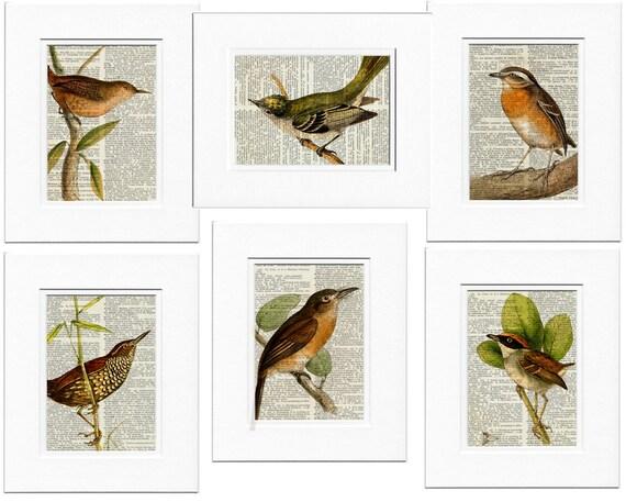 Six bird prints
