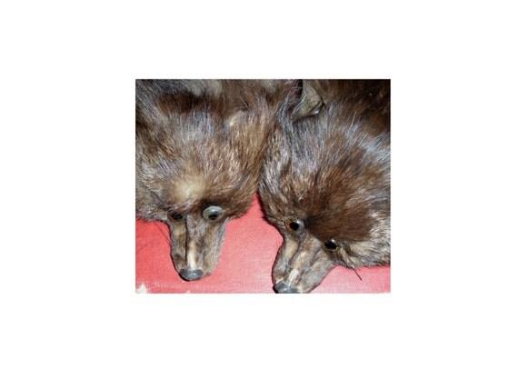 Reserved for Sagomekitsune124 - Vintage Fox Stole