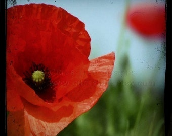 POPPY  - Original TtV Fine Art Photography Print - Signed and Dated --