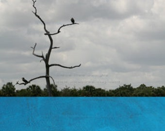 Blue Landscape with Birds Tree Water - Original Photomontage Fine Art Print - Signed and Dated --BUY 2 GET 1 FREE--