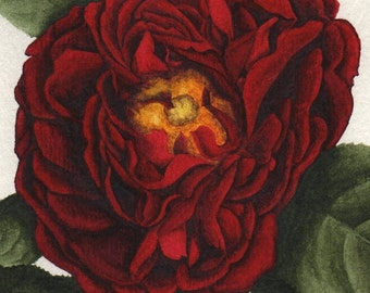 Red Tuscany Rose Print