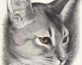 Abyssinian Cat Print