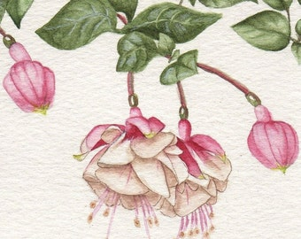 Pink Fuchsia 2 Print