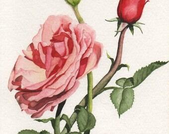 Peach Rose Print