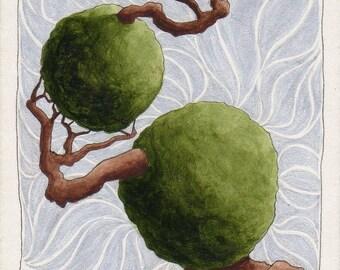 Original ACEO Twisted Bonsai Topiary