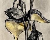 Milkweed Pods fine art print