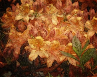 Giclee Art Print, Home Decor, Enhanced Digital Art, unframed art, Azalea