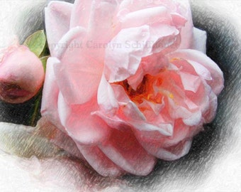 Giclee Fine Art Print, digital enhanced photo, Floral Wall Art, pink rose