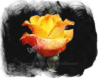 Rose Digital Fine Art, Computer Enhanced Photo, Giclee print, EBSQ