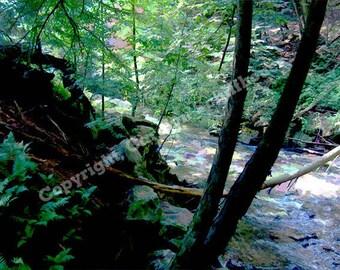 Forest and Creek Digital Art, Landscape Art Print, Office Wall Art,  11x14 Giclee print, EBSQ