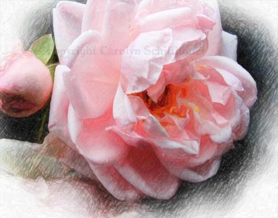 Giclee Fine Art Print, digital enhanced photo, Floral Wall Art, pink rose