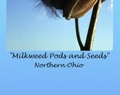 Milkweed Pods and Seeds Bookmark