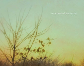 birds at sunrise - limited edition photographic print