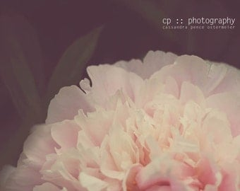 pink drama - peony limited edition photograph