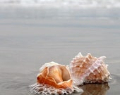 Stone Harbor Shells.  8x10 Signed Fine Art Photography Print.