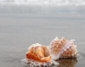 Stone Harbor Shells.  8x10 Signed Fine Art Photography Print.