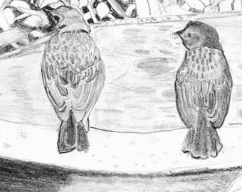 Birds in a Garden Graphite Pencil Drawing
