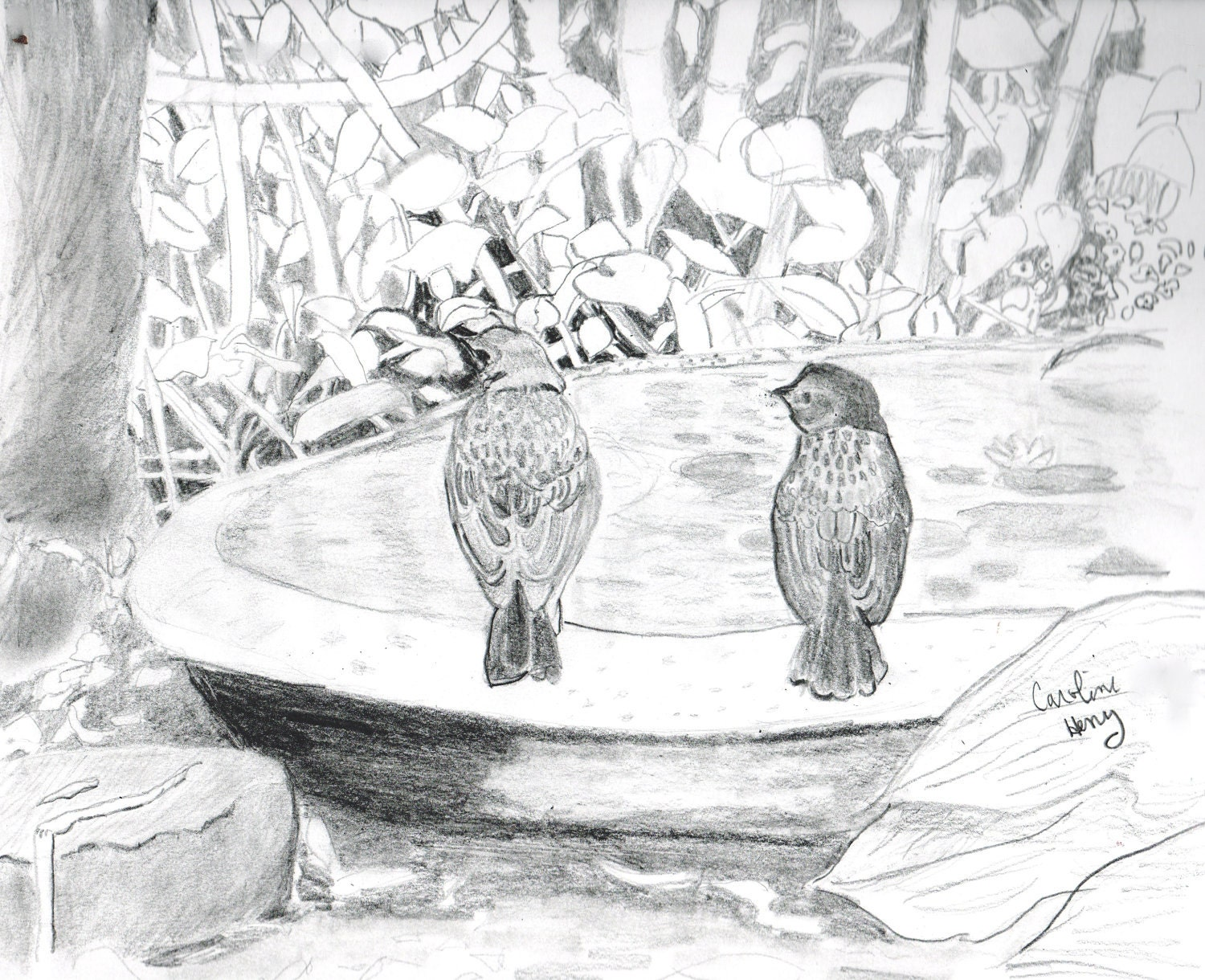 Birds in a garden graphite pencil drawing by carolineart on etsy