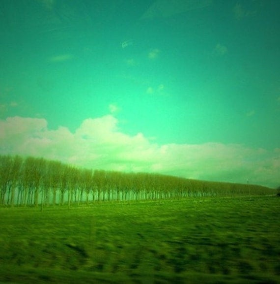 The best trees- Photography Print