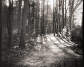 Magical Landscape Photograph in Black and White - Dancing Glade