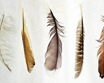 Oversized Feather Art Print - Nature Collection - Five Feathers