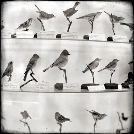 The Birds - 8x8 Print