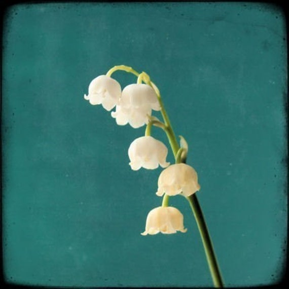 Lily of the Valley Flower Photography