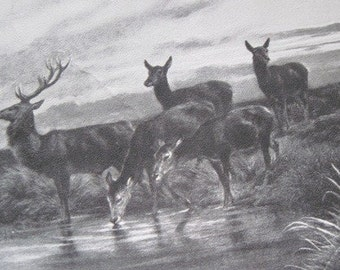 Deer Family Print Perry Pictures Black & White Paper Print from the painting Rosa Bonheur 1822-1899
