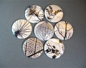 7 Leaf Fridge Magnets, Wine Charms, Pins - Khaki Forest - home living, organization, kitchen one inch for magnabilities 1182