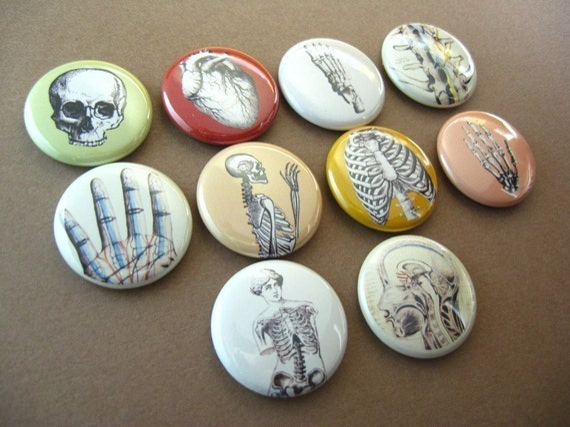 10 Fridge Magnets, Pins or Wine Charms Skeleton Bones Skull Hand Heart Anatomy, Home & Living, Kitchen, Storage Organization 102 1191