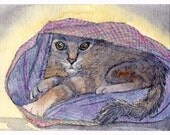 Cat kitten hibernation spring 8x10 print