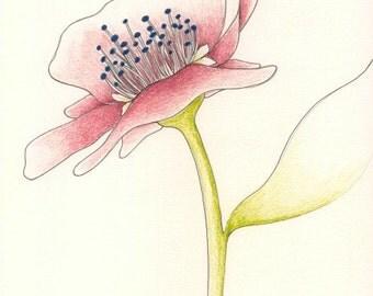 Dusty Rose Flower // archival print