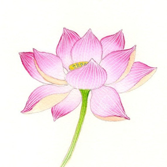 Lotus Print By Clarysagemoon On Etsy