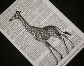 Giraffe Print on Vintage French Text - 5 x 7