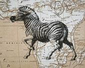 Zebra Print on Map of Africa - 5 x 7 Zebra Map Print