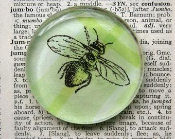 Bee Magnet  - Jumbo Glass Magnet Honeybee Bumblebee