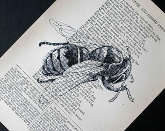 Honeybee Print - Vintage Book Page Print - 5 x 7 Bee Print - Bee Art - Nature Print