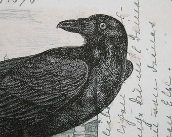 Raven or Crow Print on Vintage Postcard Background - 5 x 7 Raven Print