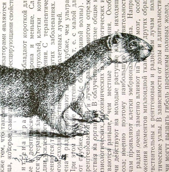 Ferret Print on Vintage Russian Book Page - 5 x 7